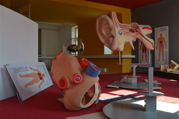Modely lidského ucha a srdce jsou připraveny k závěrečné instalaci v nové antropologické expozici.
